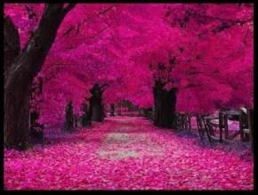 anhelar un mundo color de rosa