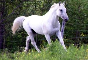 fábula del campesino y el caballo