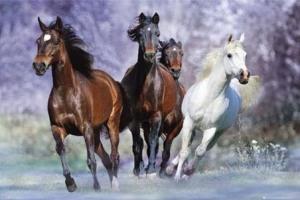 la leyenda del campesino y los caballos