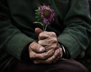 manos_abuelo_con_flor