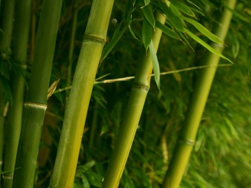flexibilidad_bambú