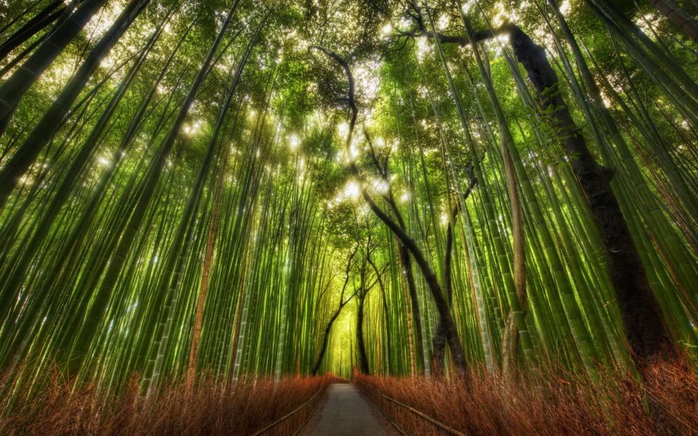 El espíritu gregario de los bambués los vuelve realmente poderosos.