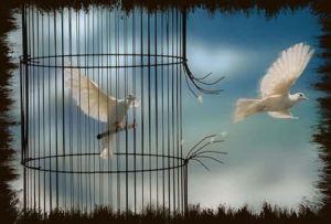 escapar de la jaula