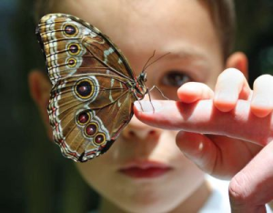 contemplar_mariposa_meditar_atención_plena_mindfulness