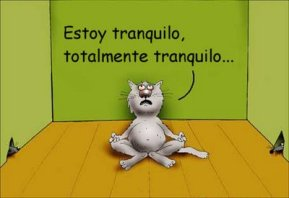 gato impaciente