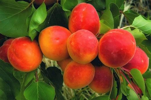 Tipos-frutos