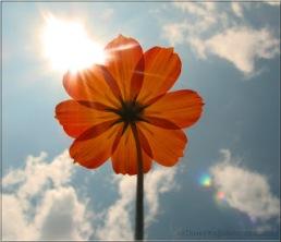 flor con sol